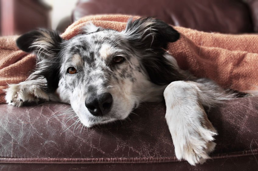 Chronic kidney failure in dogs: Symptoms and ways to manage them