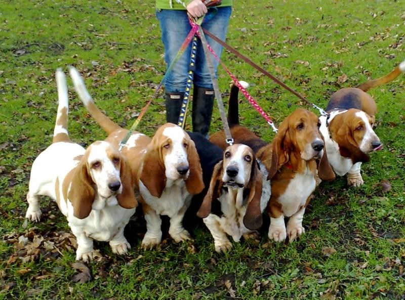 Caminhando seu cão: 6 pontas para estabelecer a liderança do bloco