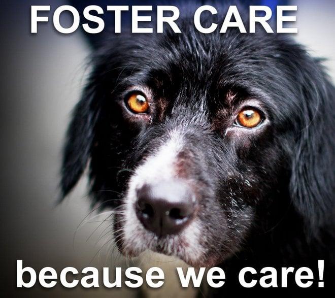 Encontrando casas de Forever: Pontas em promover um animal de estimação