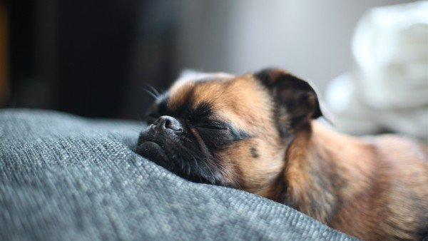 Is Your Dog Sleeping Too Much?
