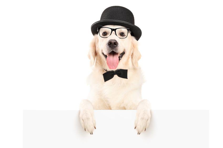 Sinaliza que seu cachorro está perdendo sua visão