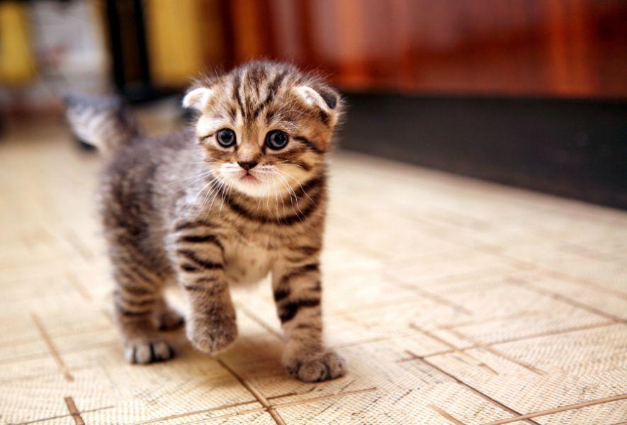 5 Essenciais que você precisa considerar antes de trazer seu novo gato para casa