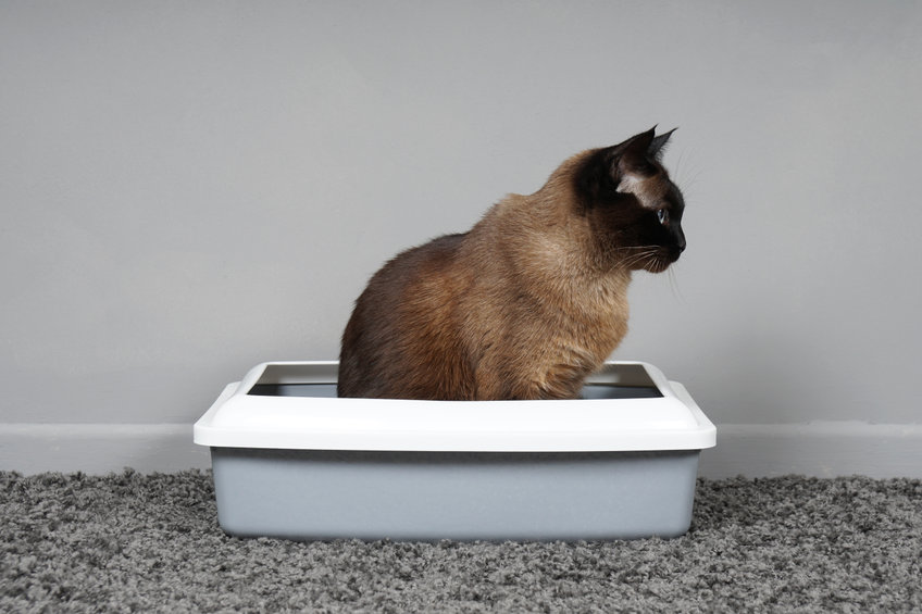 Why is my cat urinating outside the litter box?