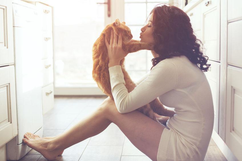 Quatro maneiras de garantir que você tenha um gato indoor feliz