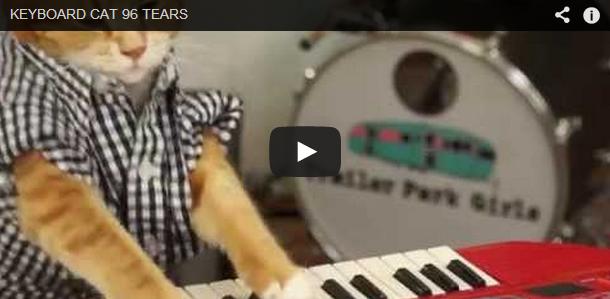 Throwback 'Purrs'-day: Ainda não consigo o suficiente de Keyboard Cat