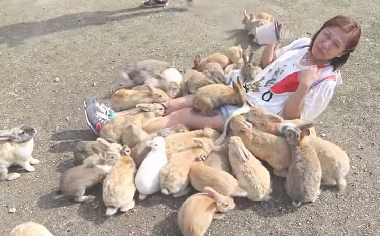 WATCH: So, So Many Rabbits At Rabbit Island