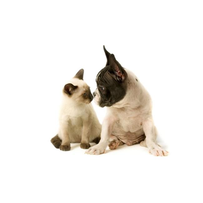 Gato Pessoas, Cão Pessoas e Personalidade