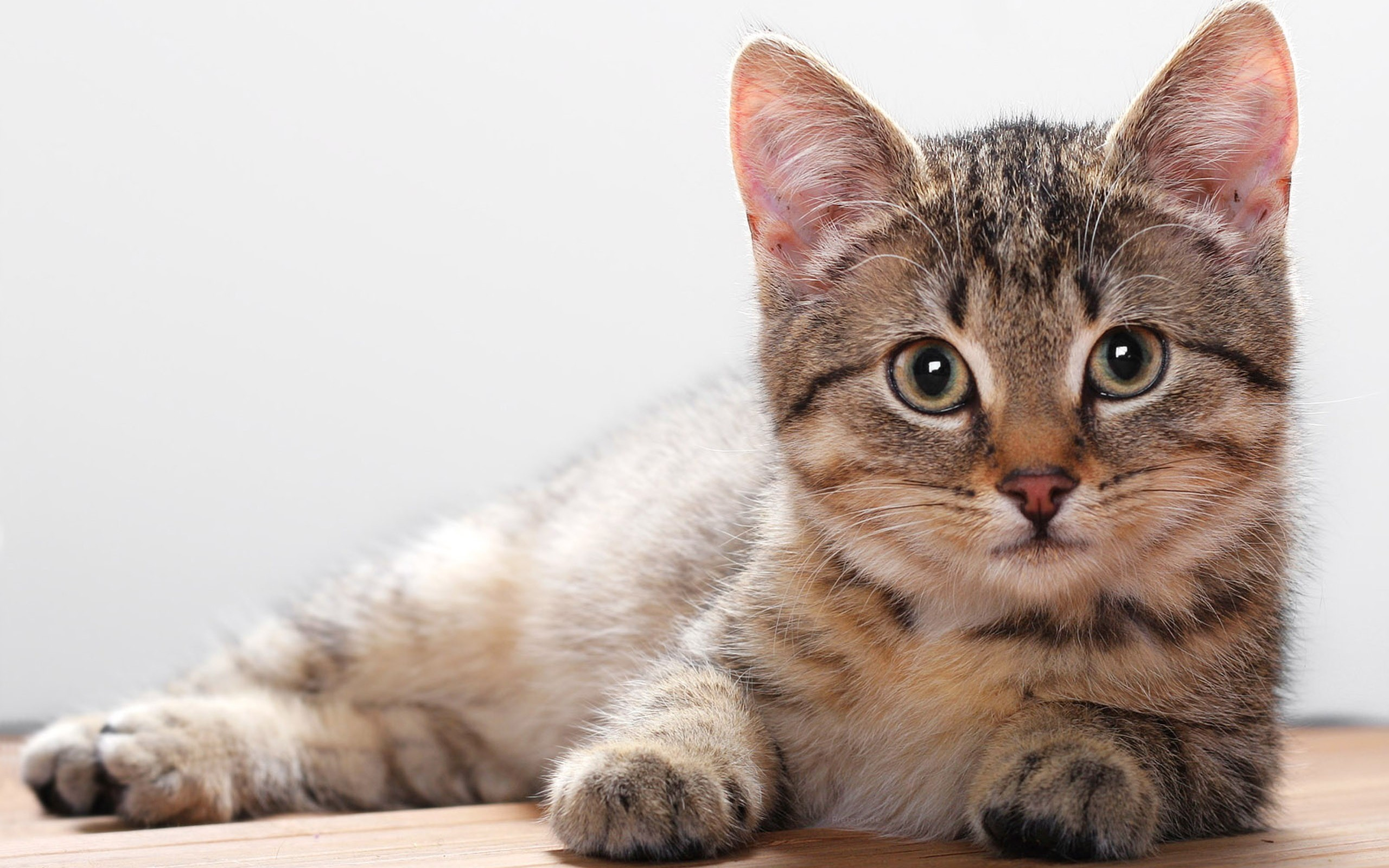 10 Common Illnesses in Cats