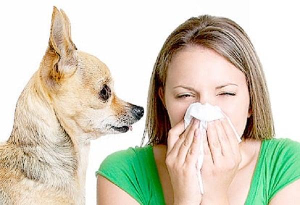 Derrotando Dander: Como lidar com alergias Pet