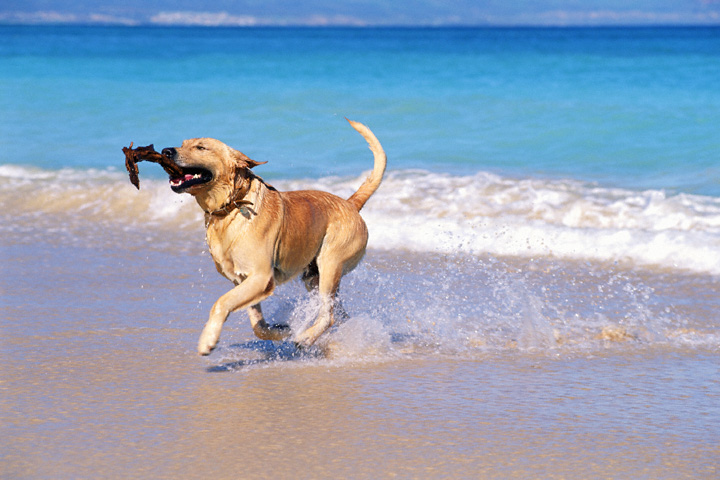 5 Tips to Enjoy a Safe Trip to the Beach with Your Dog