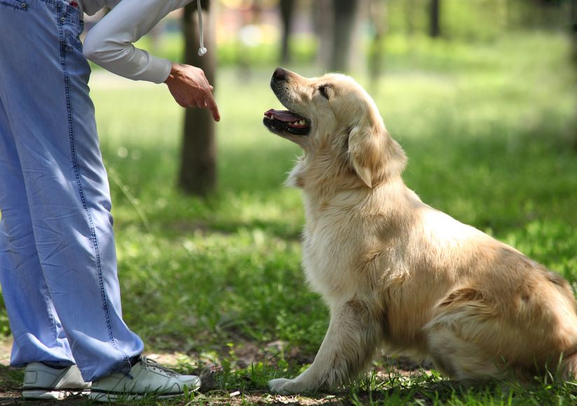 Tips for setting boundaries with your dog