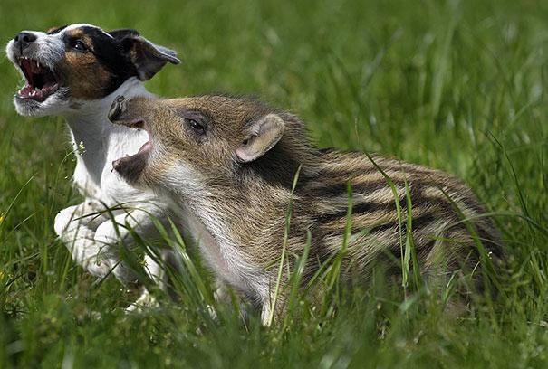 Improváveis amizades animais que fazem seu coração derreter 2
