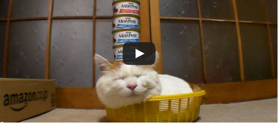 What these cats can do is OUT OF THIS WORLD! [VIDEO]
