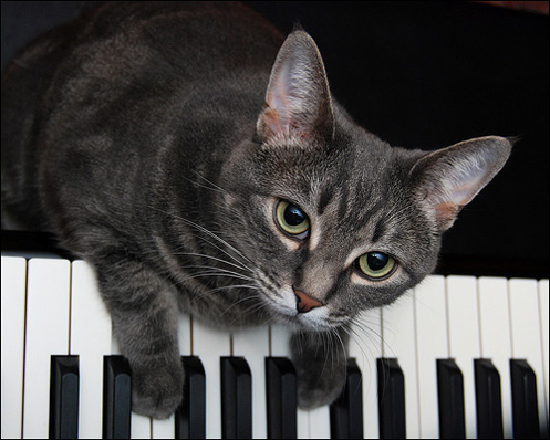 9 Musical Cats