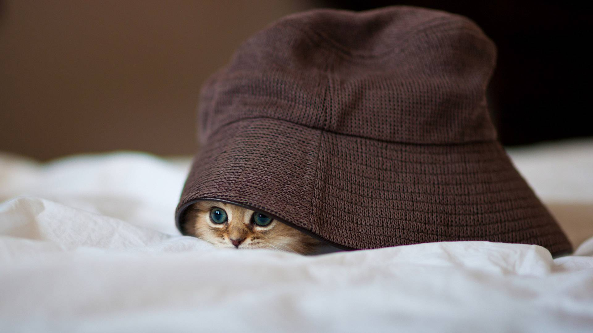 How To Coax Out a Cat That is Always Hiding