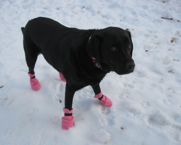 Protecting Your Dog's Paws Through the Winter Season