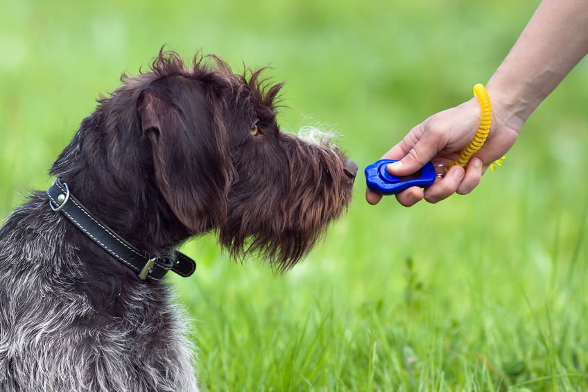 클리커로 강아지 훈련하기