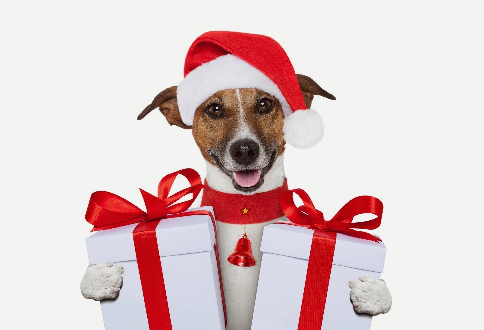 Guia do presente do Natal para cães