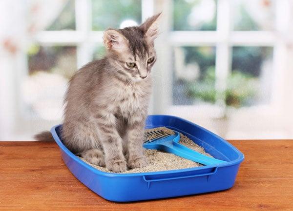 Litter Box problemas e como resolvê-los
