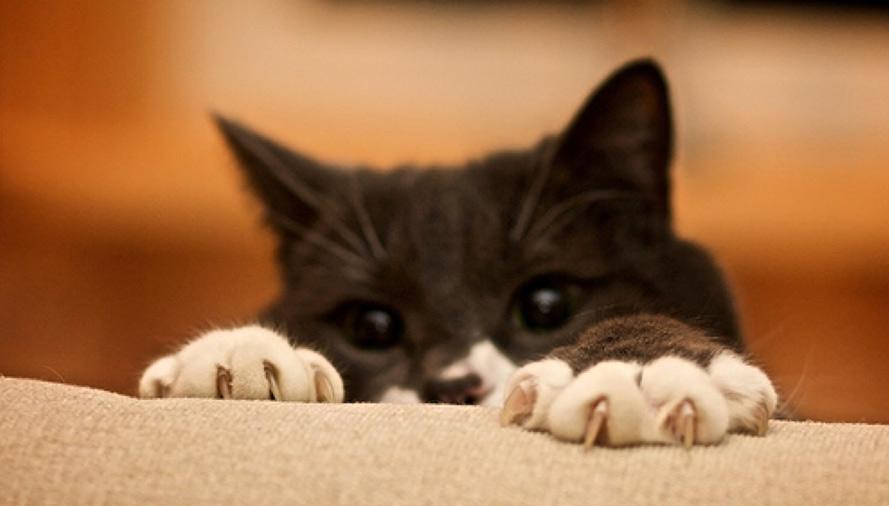 너의 고양이를 Declawing에 진눈깨비