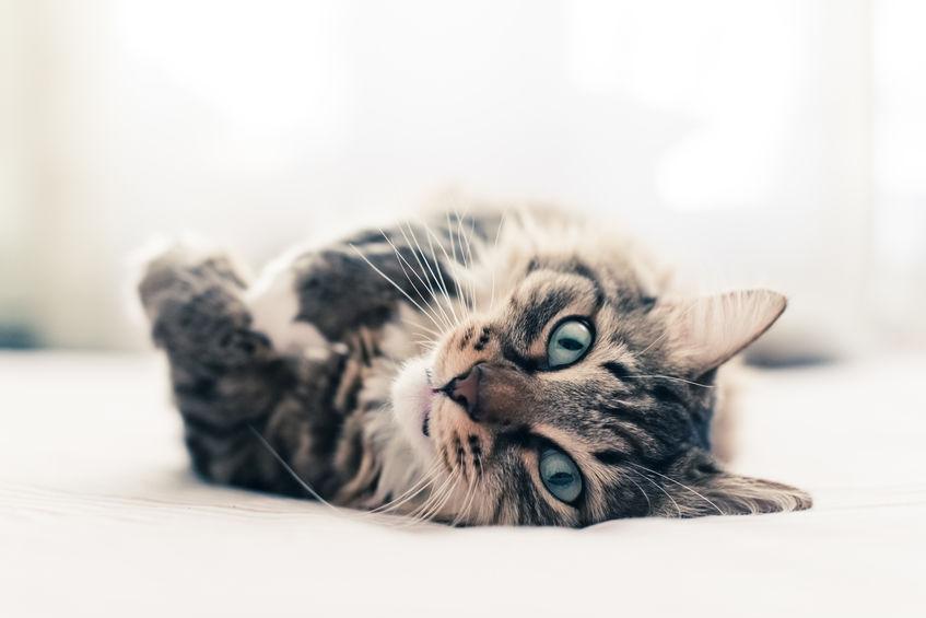 고양이가 눈을 통해 말하고자 하는 것