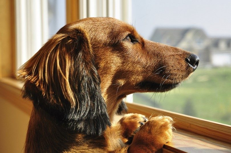 How to help your dog's separation anxiety