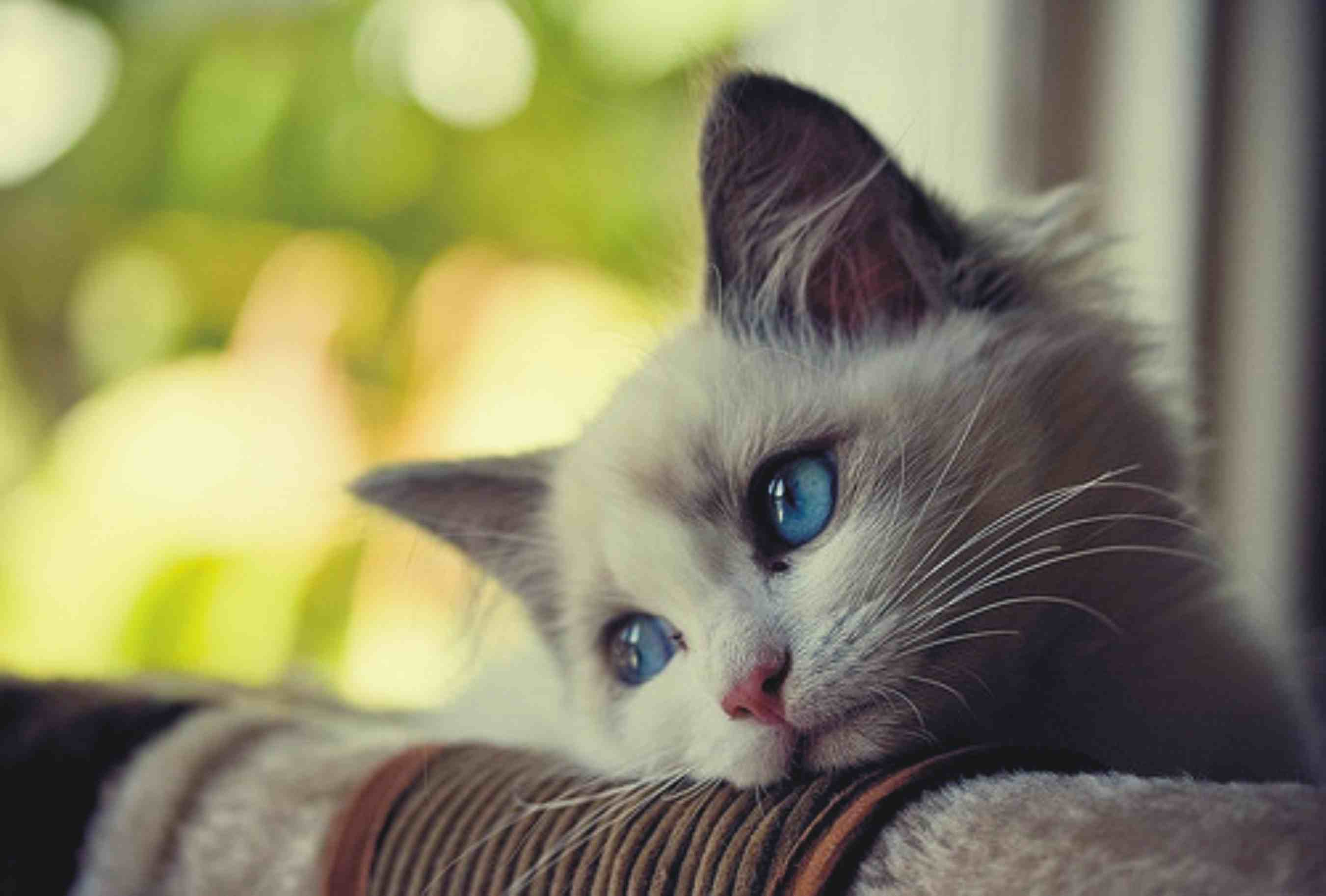 How to Help Your Cat Cope with Grief