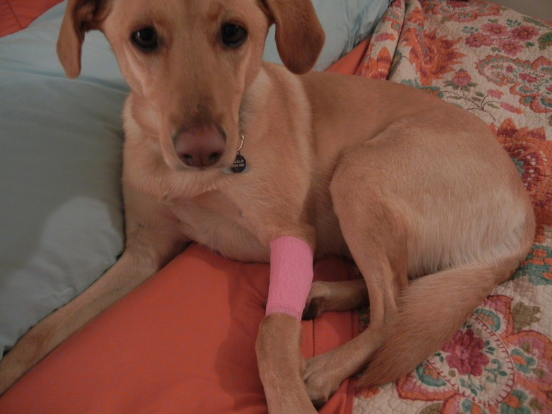 First Aid Tips To Help Save Your Dog's Life