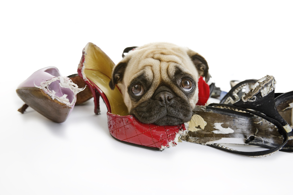 How To: Prevent Your Pets From Wrecking Your Belongings