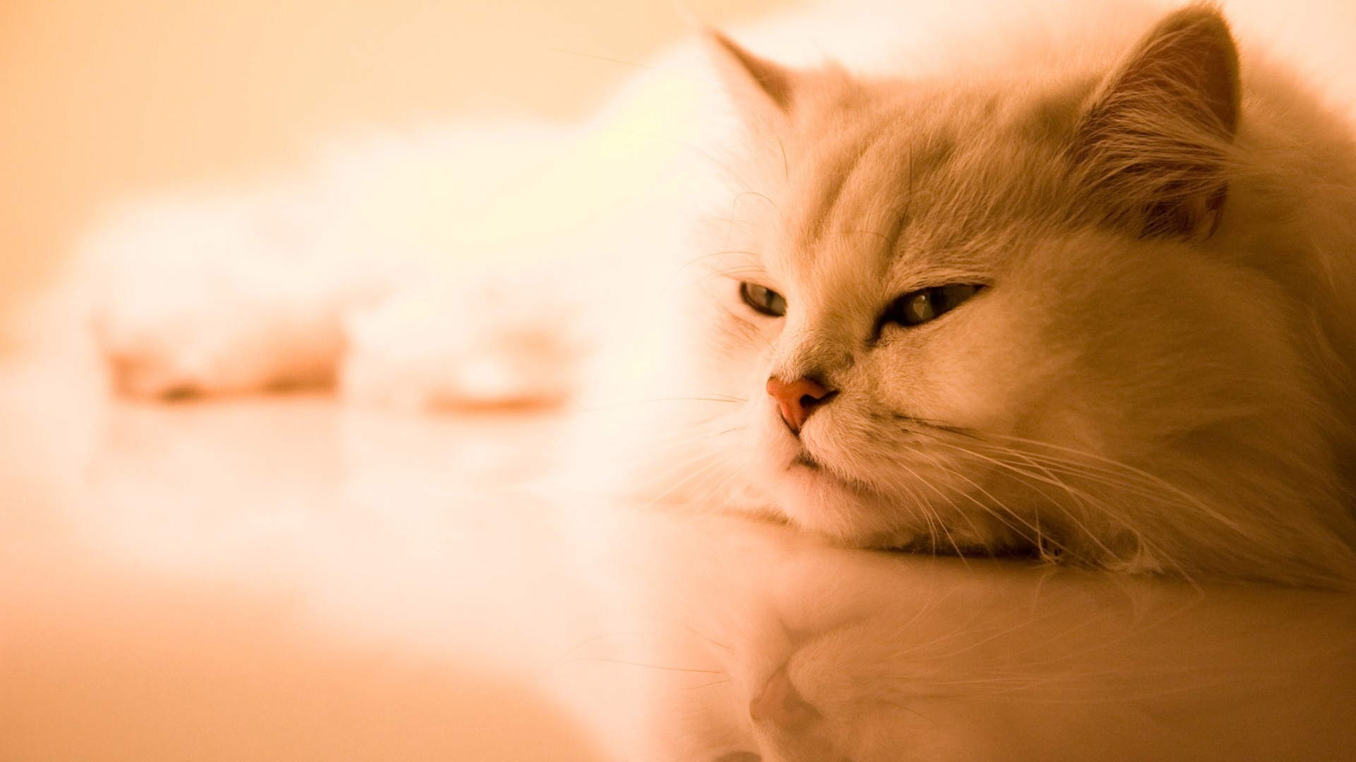 8 sinais de tédio em gatos de interior