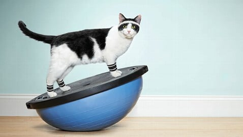 5 Tips To Keep Your Cat Active