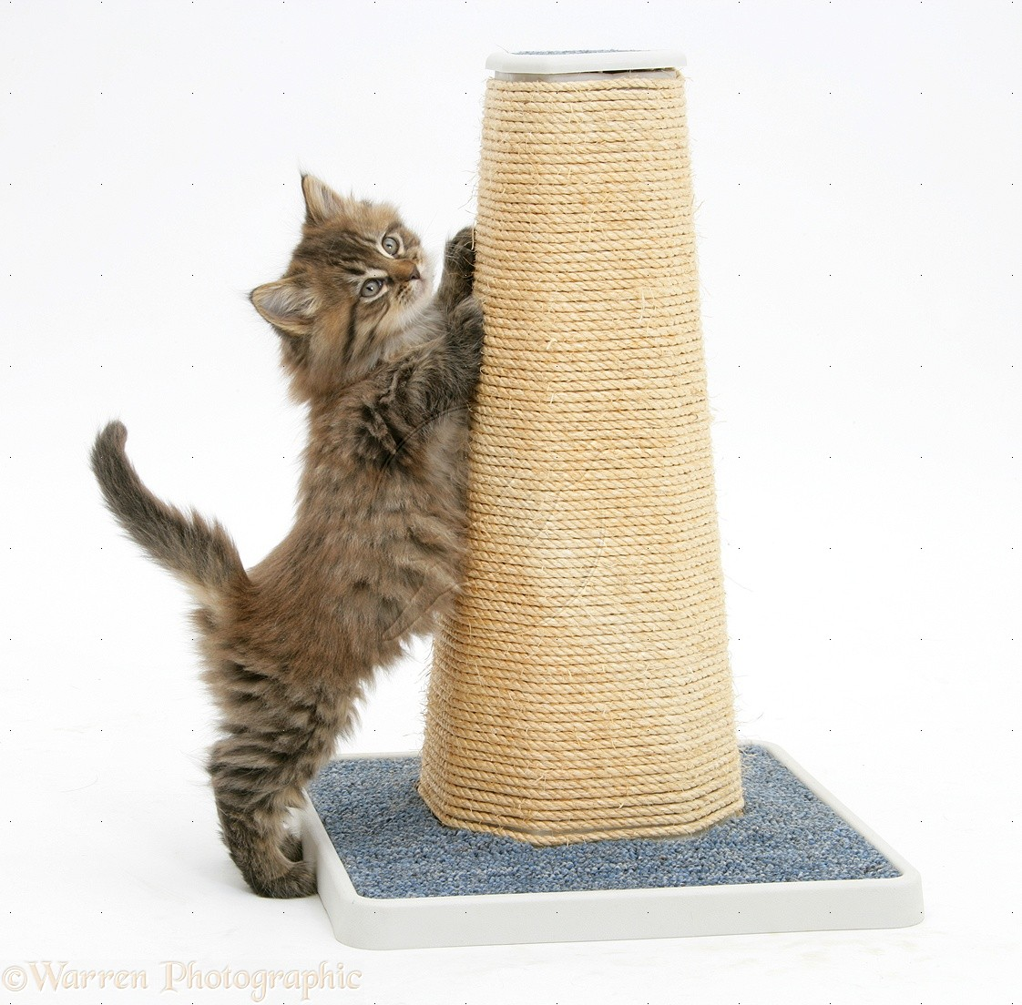 The Best Positions For A Cat S Scratching Post