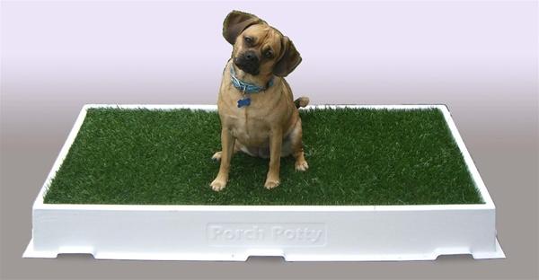 Toilet formação opções para Indoor cães