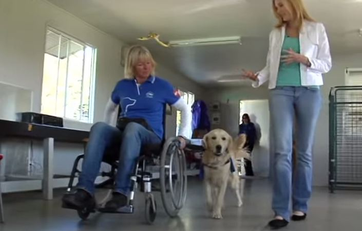 WATCH: Assistance Dogs Four Legged Carers