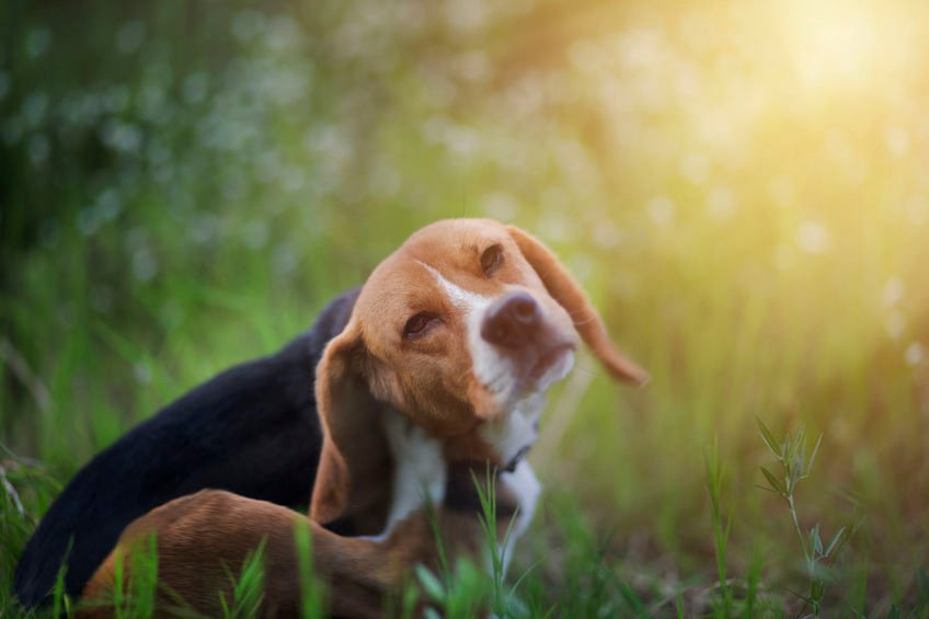 Can omega-3 cure your dog's itchy skin?