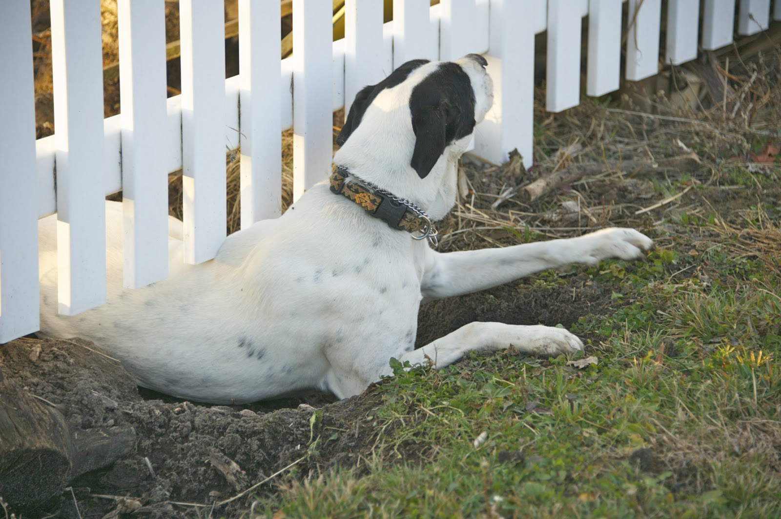 Find Out Why Your Dog Is Escaping And How To Stop It From Occuring