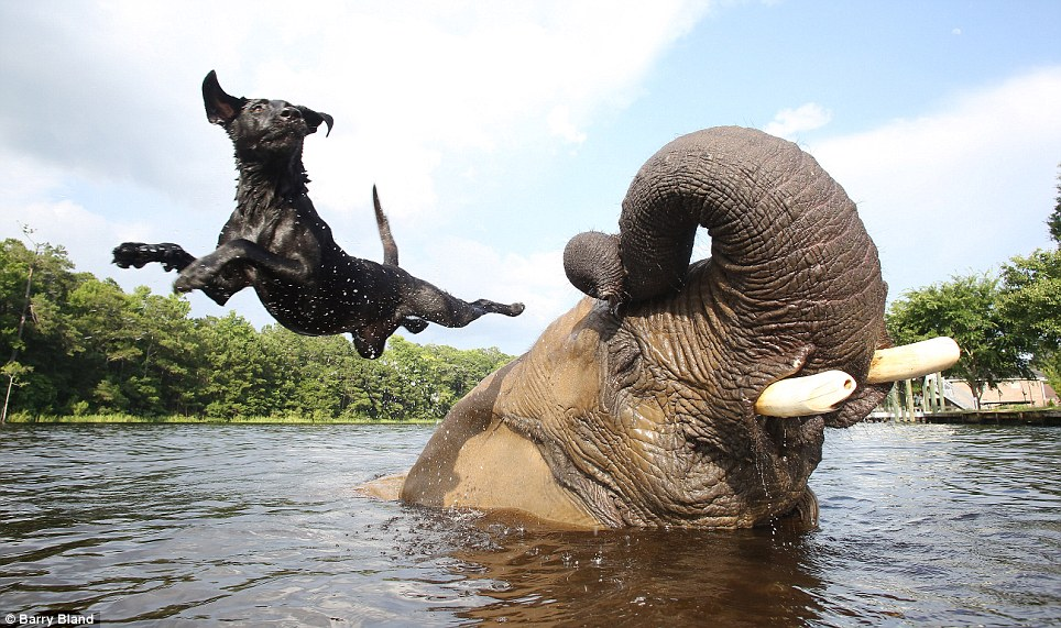 Unlikely Animal Friendships That Make Your Heart Melt