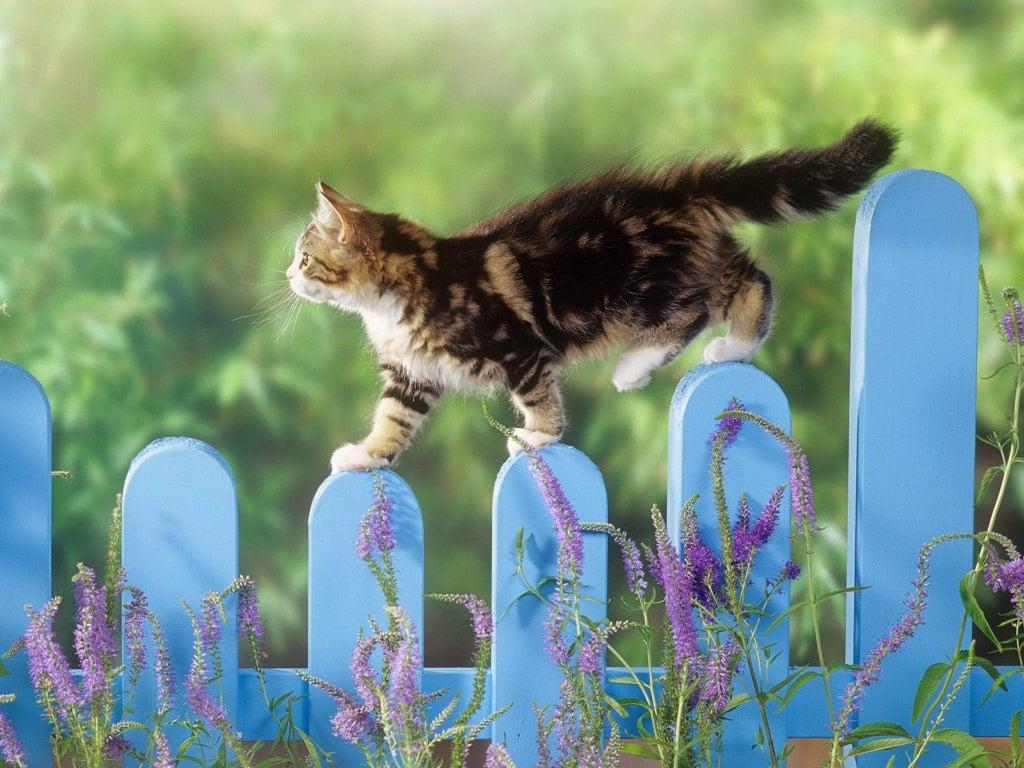 5 pontas em como transicionar seu Kitty de um gato ao ar livre a um interno