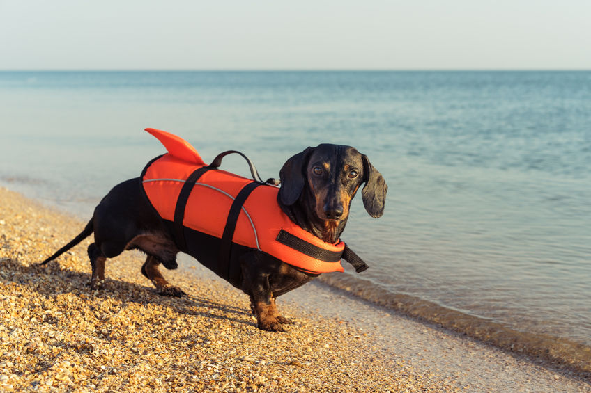 How to help your dog if he's afraid of water
