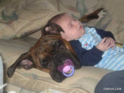 Is Your Child Ready for the Responsibility of a Pet?