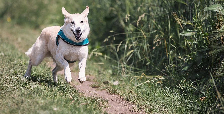 How to treat a dog with compulsive disorder