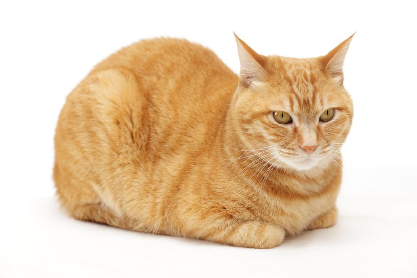 Here S Why Your Cat Sits Like A Cat Loaf