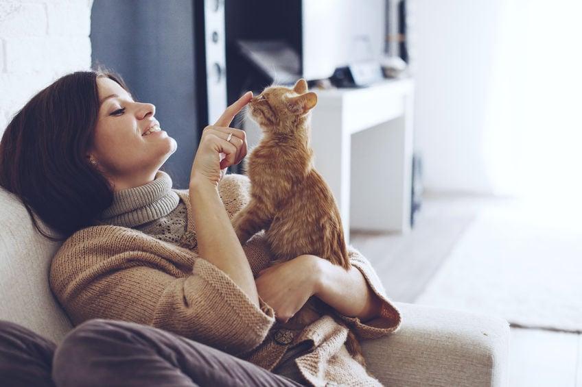 Fazendo o movimento menos estressante para o seu gato