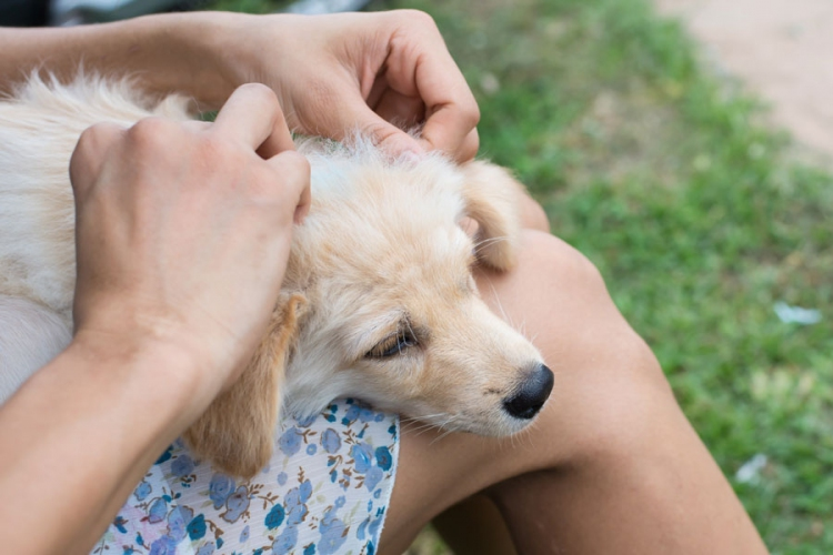 How to Protect Your Pet from Ticks this Summer