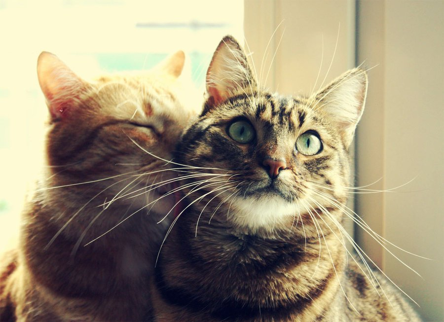 Myth Busting Cats and Solitude