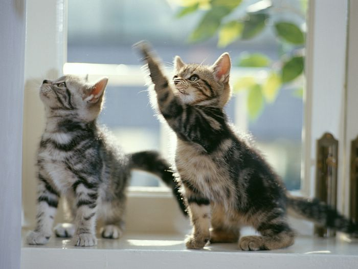 The Best Games To Play With Kittens