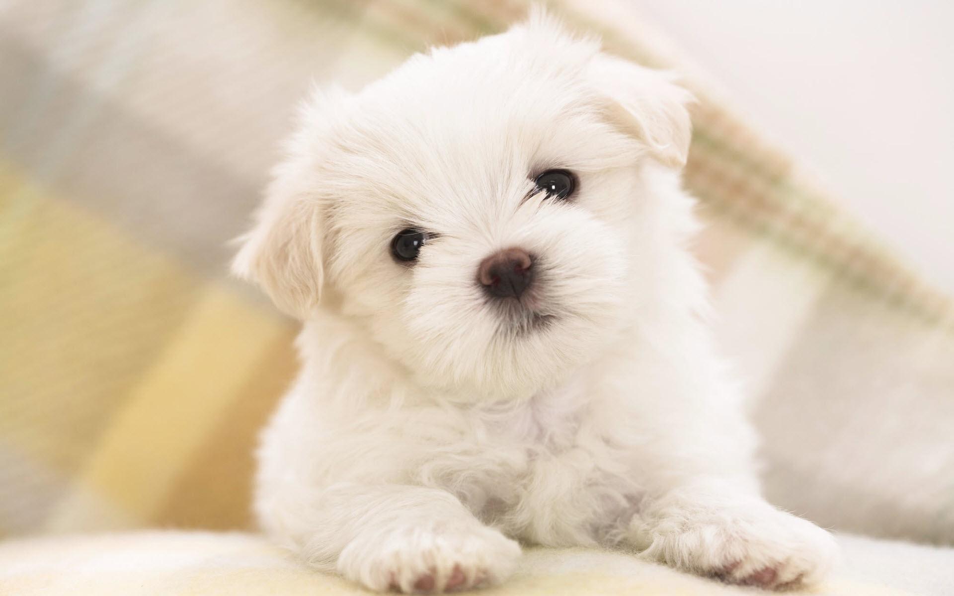 Dicas para criar filhote de cachorro para os proprietários fisrt tempo