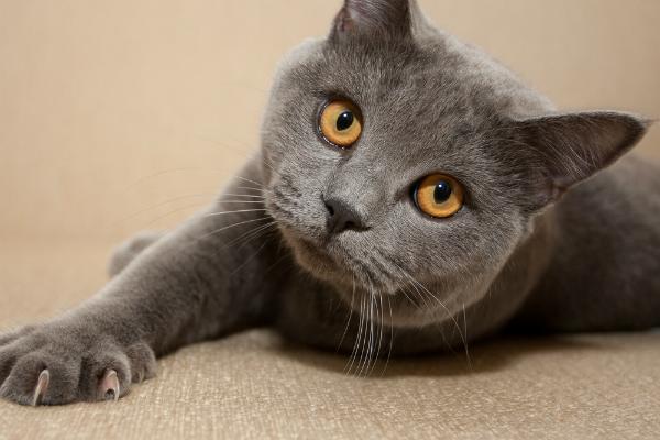 고양이 발톱 손질을위한 5 가지 팁