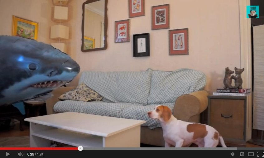 Dog Vs. Shark: Who Will Win?