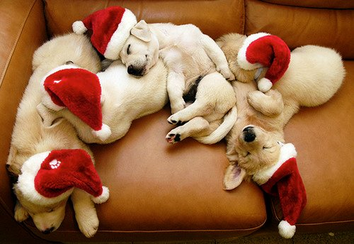 10 Great Christmas Gift Ideas for Your Dog